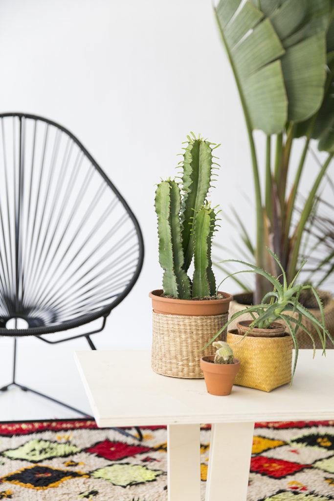 fauteuil acapulco noir, tapis azilal, cactus, agence PARADE